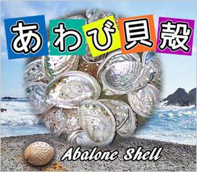 あわび貝殻(原貝)