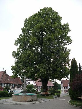 Linde in dem kleinen Walfahrtsort Betenbrunn