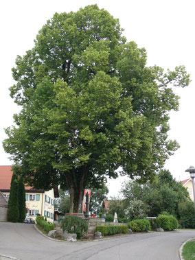 Linde vor dem historischen Landgasthaus zur Post in Betenbrunn