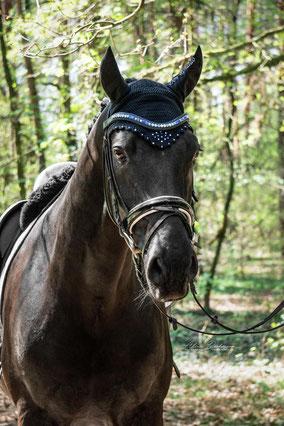 Pferd mit stark geschungenem Stirnriemen blau schwarz