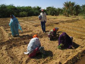 Octobre 2014 - On plante des oignons