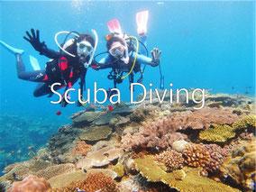 ダイビングで世界の海を楽しむ!