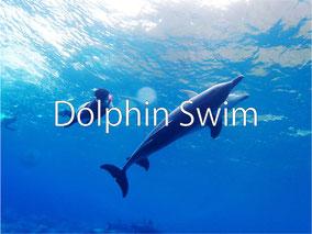 イルカと泳ごう♪夢のドルフィンスイム!