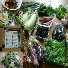 飯塚農園さんの野菜宅配例