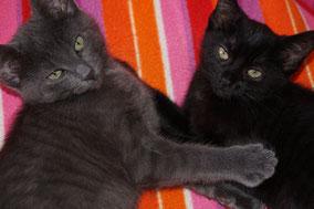Unsere neuen Familienmitglieder - Linus & Mimi