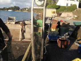 pesage d'huitres
