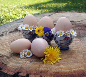 Bio-Eier, gelegt von glücklichen Hühnern