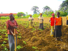Le coltivatrici le mettono a frutto