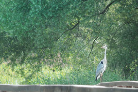 Kopacki Rit - Nature Park
