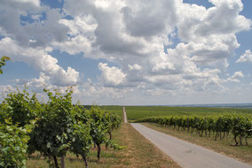 Vineyards, wine and food of Baranja region