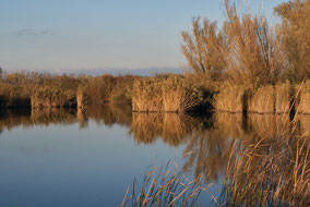 Autumn-Winter around the Drava river