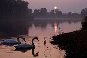 Old River Drava at Sunset
