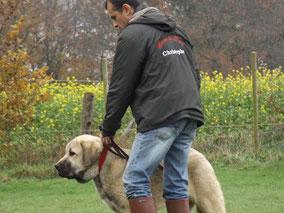 Education chien et chat