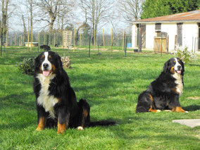Pension chiens
