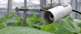 radiomètre à infrarouge pour la mesure de température  des plantes - Agralis