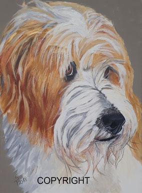 Kopfporträt von Griffonmix: braune Augen, schwarze Nase. Schnauze weißes Fell, Kopf und Ohren rötliches Fell, Tiermalerei, gemalte Tierportraits nach Fotovorlage, Tiere zeichnen lassen