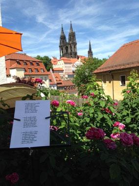 """Unser Blick von der """"Bühne"""" im Rosengärtchen an den Afrastufen."""