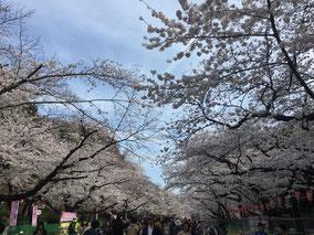 3/26 上野公園にて