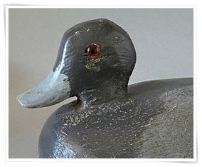 American blue bill decoy duck