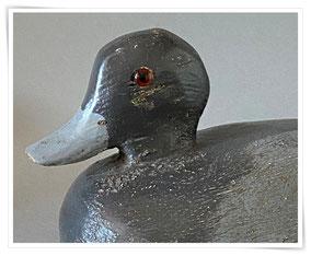 American blue bill decoy duck
