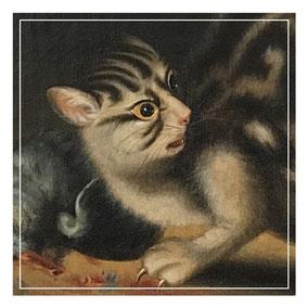 Startled cat portrait