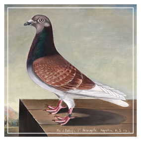J T Ryder portrait of a racing pigeon
