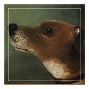 Portrait of a head of a Jack Russell