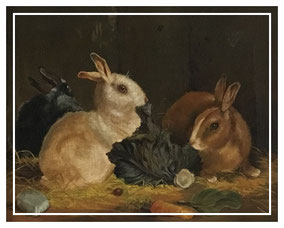Rabbit feeding on a cabbage