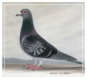 J Browne portrait of a racing pigeon