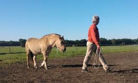 Los grondwerk waarbij het paard uit zichzelf aansluit