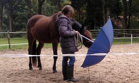 Met jonge paarden werken aan het zelfvertrouwen