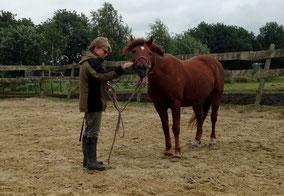 Paarden gapen regelmatig als ze tot volledige ontspanning komen
