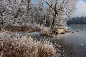 Landschaftsfotografie Deutschland, Dessau, alte Eiche