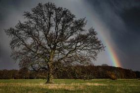 Regenbogen und Eiche