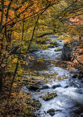 Landschaftsfotograf Deutschland, Nationalpark Harz, Bodetal
