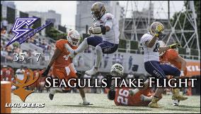 Seagulls take Flight