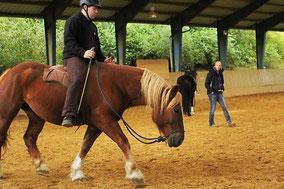 Aktuelle Kurstermine für Freiarbeit und Natural Horsemanship