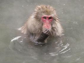 Snow monkey tour from Tokyo