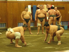 Seeing Sumo