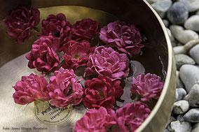 Rosen schwimmen in einer mit Wasser gefüllten Klangschale