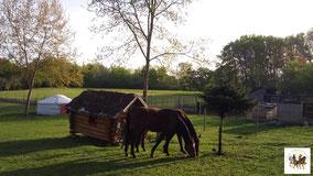 survie autonomie résilience ferme chevaux yourte isba
