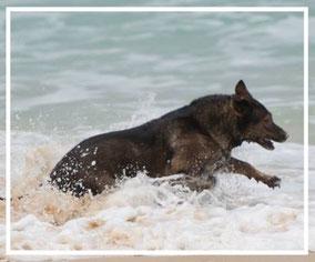 """""""Seehund"""" Lisa von der Döllenwiese geb. 08.02.2008 und immer noch verrückt wie ein junger Hund"""