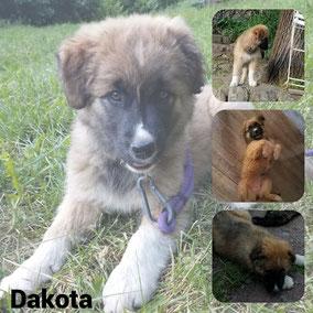 Adoptée en Juillet 2021