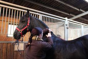Friktion der Faszien am Pferdehals