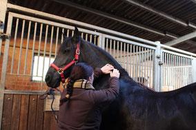 Manualtherapie des Pferdehalses