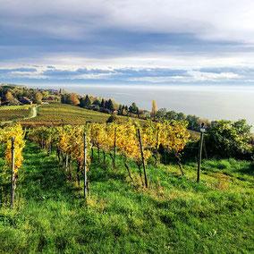 Der Überlinger See und das Linzgau bestechen durch wunderschöne Wein-Wanderwege und einen endlosen Blick über den Bodensee. An besonders schönen Tagen kann man hier seinen Blick über das gesamte Alpen-Panorama schweifen lassen.