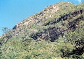 Facheiroa braunii Typstandort / type habitat / habitat do tipo