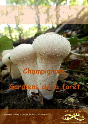 ADN conférence Champignons  : gardiens de la forêt