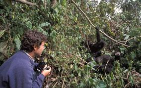 gorilla-trekking-rwanda-tour.jpg