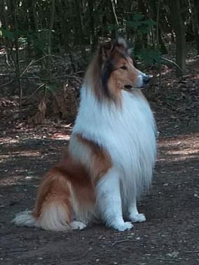 Lassie. 7 December 2010. Eigenaar: Annemie.